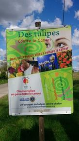 affiche_tulipes1
